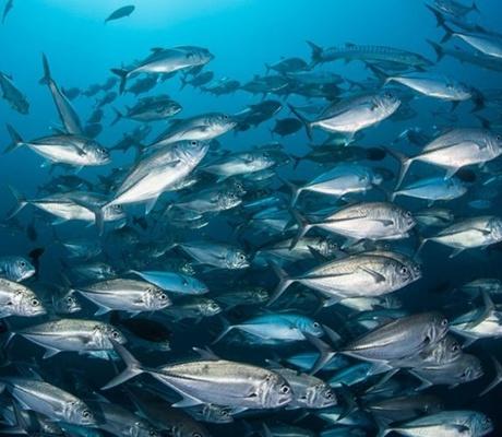 Des mesures pour diminuer les quotas de pêche eaux profondes dans l'Atlantique du Nord-Est