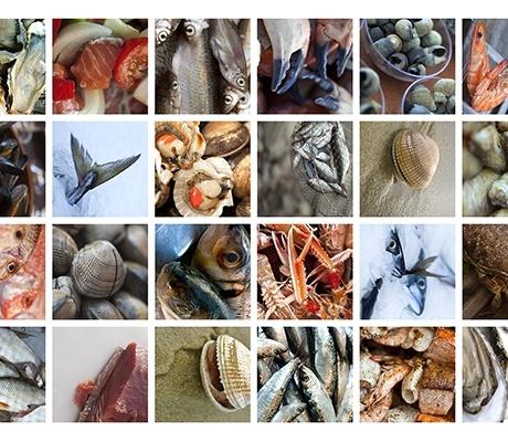 [Annonce] Recherche banc de poisson sur marché ou tournée - secteur aquitaine